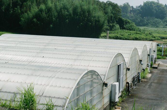 緑豊かな環境にある養鰻場