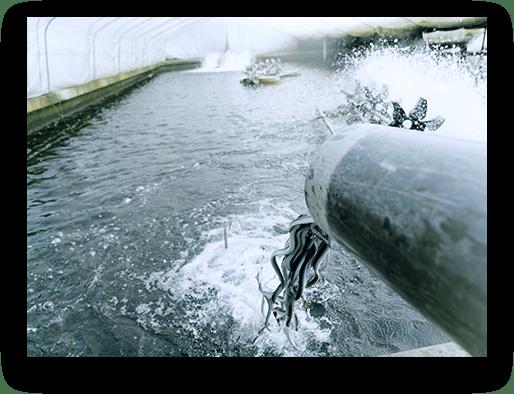 24時間集中管理の養鰻場設備 IMG