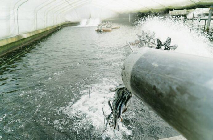 養鰻の歴史は浜名湖で始まりました