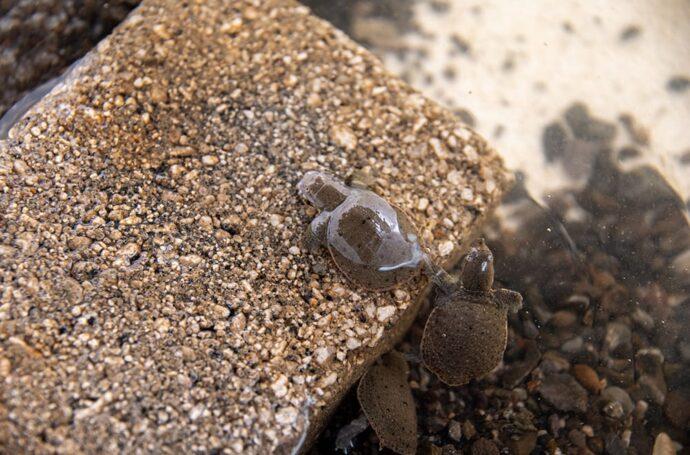 鹿児島鰻でもうなぎとスッポンを養殖