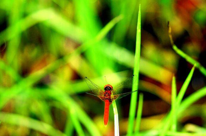 ハッチョウトンボが舞う豊かな自然環境